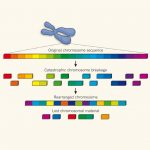 1回の細胞イベントで生じたと思われる大規模なゲノム再配列とそのがん化における意義