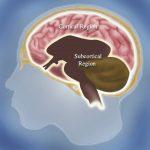 """脳の後部皮質領域(""""posterior hot zone"""")に「夢の中枢」がある"""
