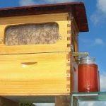 ミツバチの巣を壊さずに「はちみつ」を収穫できる巣箱