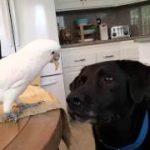 イヌに餌を与えるオウム