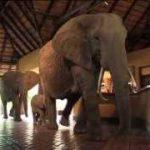 ゾウがちょっと通るホテル。建物内を闊歩する野生のアフリカゾウ!
