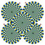 やっぱりネコも反応する目の錯覚 「蛇の回転」