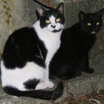 ネコはイヌと異なりほとんど遺伝子を変えずに家畜化した