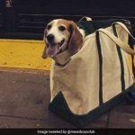 NYCの地下鉄ではバッグに入ってない犬の乗車は禁止! これらの犬はOK?