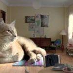 もし飼い猫が超巨大サイズだったら