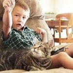 猫が猛犬に体当たり、飼い主の子ども救う