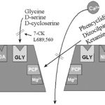 NMDA受容体機能におけるLセリン合成系の重要性―統合失調症のDセリン欠乏仮説