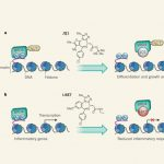BETブロモドメイン選択的阻害薬――BRD4-NUT融合がん遺伝子によるNUT正中がんに有効
