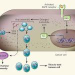 静脈内投与によってヒトがん組織の特異的崩壊を引き起こす改変天然痘ウイルスの開発