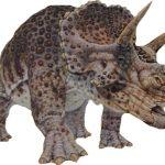 トリケラトプスという種類の恐竜は存在せず、他の恐竜の幼若期のものを間違えて分類していた