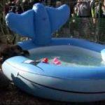 おもちゃの子ガモに釣られて泳ぎを学ぶ2匹の赤ちゃんカワウソ