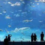 沖縄美ら海水族館の「黒潮の海」水槽