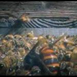【閲覧注意】スズメバチ30匹がミツバチ3万匹を殺す