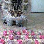 猫は「生肉」と「茹でた肉」…どっちが好き?