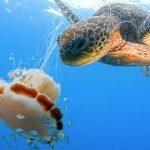ウミガメは、餌を食べる時に手のように器用にヒレを使う
