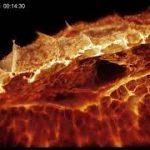 生きた細胞内の高精細3D映像化に成功