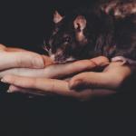 子宮頸がんワクチンマウス実験論文「撤回」