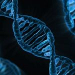 CRISPR-Cas9は、これまで考えられていたより精度が低く、予想以上に「広範囲の」遺伝子変異を「高い頻度で」引き起こす