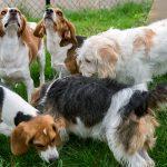 遺伝子編集技術「CRISPR」で筋ジストロフィーの原因遺伝子を修復、生きた犬の治療に成功