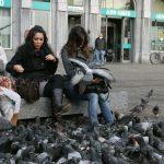 なぜ世界中の都市に多くのハトがいるのか?