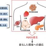 新たなNASH治療薬(FGF21のPEG化アナログ)、肝脂質比を有意に減少
