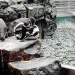 水族館で死んだペンギン 原因は餌のイワシに大量の塩