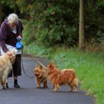 犬の散歩中に骨折する高齢者が増えている。女性は特に注意。