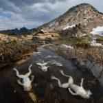 501種の両生類が減少、90種が絶滅、ツボカビ症で