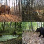 悲劇の原発事故から33年。チェルノブイリは今、野生動物たちの王国へ