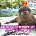 不明のアシカの赤ちゃん見つかる、大阪・天王寺動物園