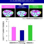 腸内で増殖するビフィズス菌は酢酸の産生を介してメタボを改善する…乳酸菌はどうよ?