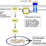 MEK阻害薬はBRAF変異を伴うメラノーマの生存を改善する