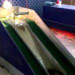 一見楽しそうにみえるアヒルのヒナ専用「すべり台」
