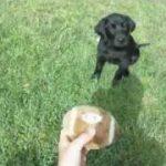 成長の記録…犬がボールをキャッチできるようになるまで