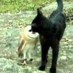 黒ネコとメンフクロウ