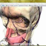 Googleが筋肉や骨、臓器などの人体構造を詳細に把握できる「Body Browser」を公開