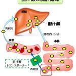 胆汁酸トランスポーターを特異的にする新しい慢性便秘薬グーフィス®(エロビキシバット)