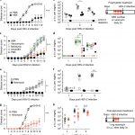 アミノグリコシド系抗生物質は、マウスのウイルス抵抗性を高める