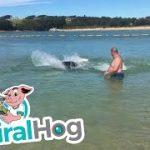 ヒトが大勢いる浅いビーチで魚を捕るアザラシ