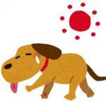 イヌの熱中症リスクについて
