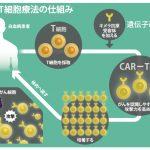 白血病治療薬「キムリア」了承、米国で1回5千万円