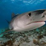 サメ105匹中、41匹の胃から陸の小鳥の死骸、どうやって?