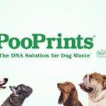 放置された犬のフンをDNA解析して飼い主を特定するサービス