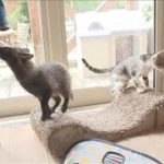 子タヌキを育てる母ネコ