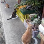 """野良猫も""""Social Distance"""""""