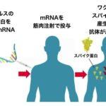 2つの新型コロナウイルスワクチン これまでに分かっていることとまだ分かっていないこと
